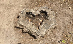 Death Love And A Tree Stump